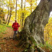 DI Hrastnik: Pohod na Kal na kostanjev piknik